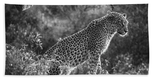 Leopard Sitting Black And White Beach Towel