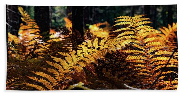 Beach Towel featuring the photograph Maine Autumn Ferns by Jeff Folger