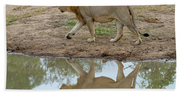 Male Lion And His Reflection Beach Towel