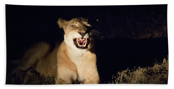 Nightmare Lioness Beach Towel
