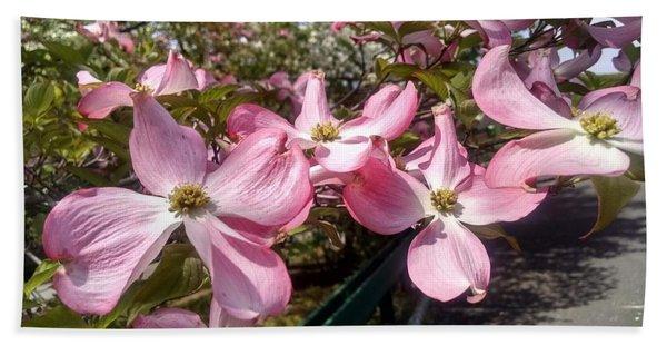 Pink Dogwood Blooms Beach Sheet