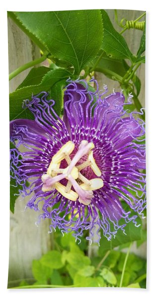 Purple Passionflower Beach Towel