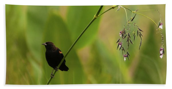 Red-winged Blackbird On Alligator Flag Beach Towel
