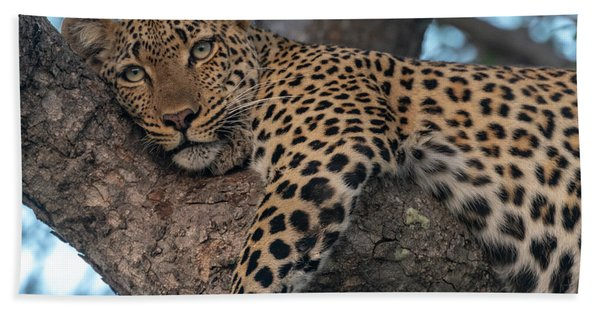 Relaxed Leopard Beach Towel