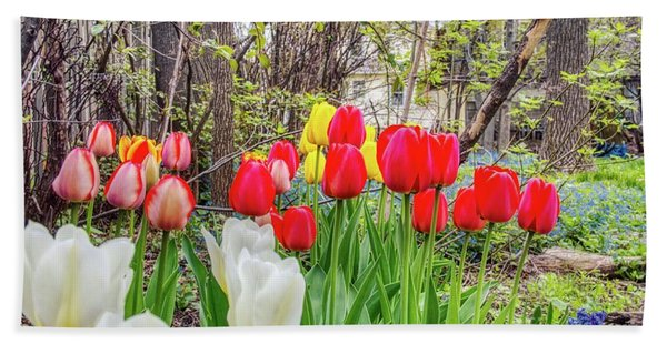 The Tulips Are Out. Beach Towel
