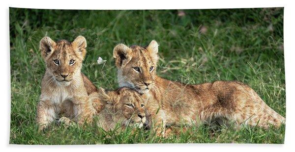 Three Cute Lion Cubs In Kenya Africa Grasslands Beach Towel