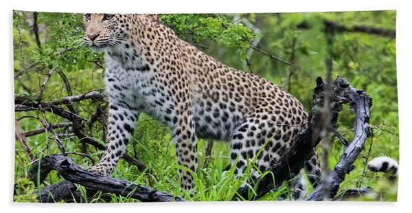 Tree Climbing Leopard Beach Towel