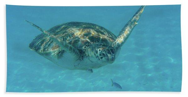 Turtle Approaching Beach Towel