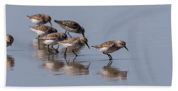 Western Sandpipers And Reflection Beach Towel