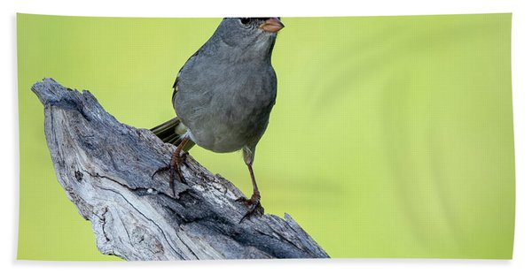 White Crowned Sparrow 1 Beach Towel