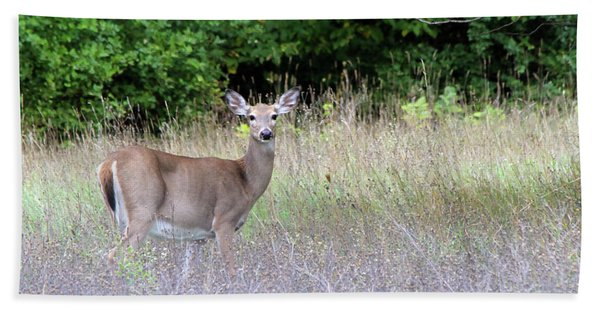White Tale Deer Beach Towel