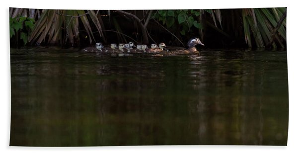 Wood Duck And Ducklings Beach Towel