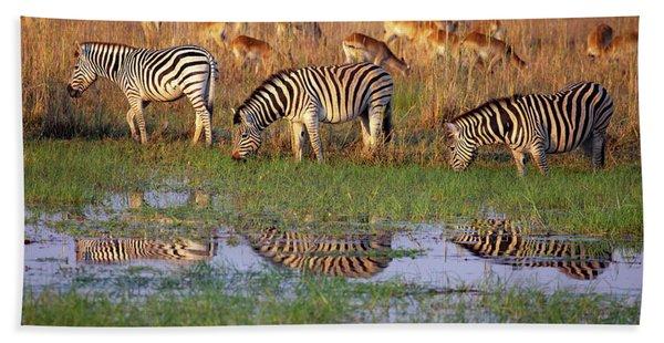 Zebras In Botswana Beach Towel