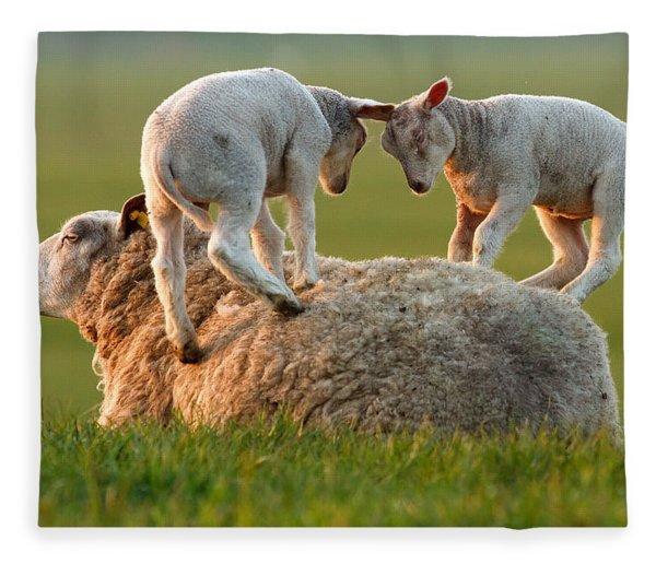 Leap Sheeping Lambs Fleece Blanket
