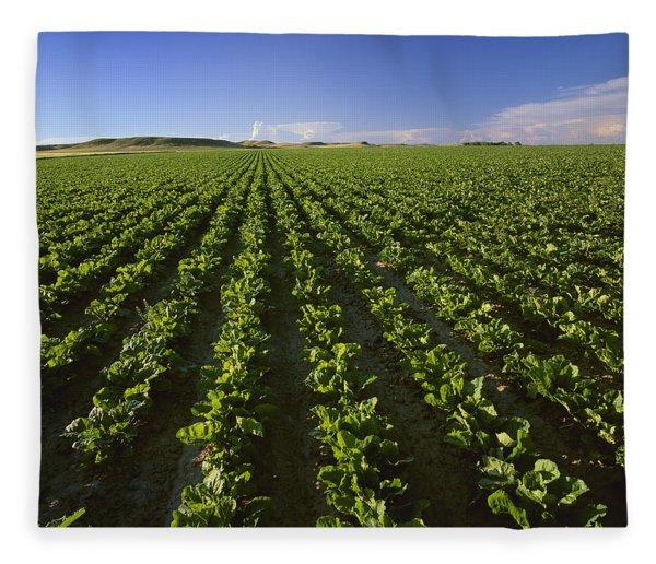 Agriculture - Field Of Maturing Sugar Fleece Blanket