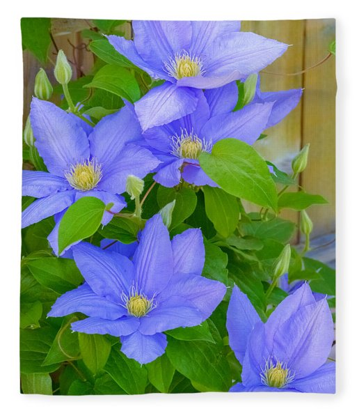 Fleece Blanket featuring the photograph Clematis  by Garvin Hunter