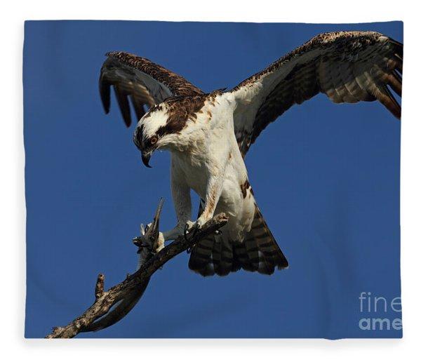 Osprey With A Fish Photo Fleece Blanket