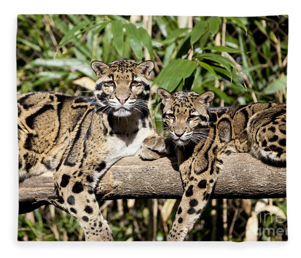 Fleece Blanket featuring the photograph Clouded Leopards by Brian Jannsen