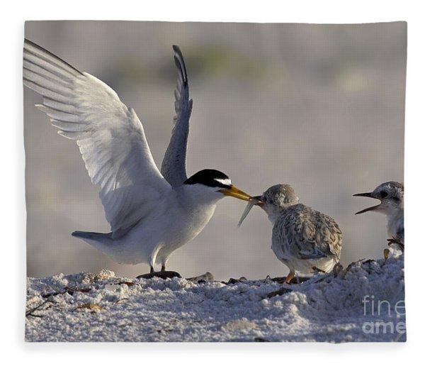 Least Tern Feeding It's Young Fleece Blanket