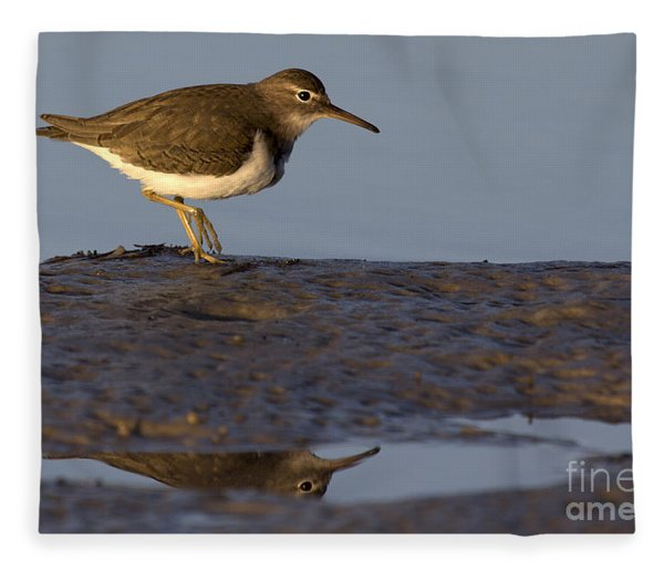 Spotted Sandpiper Reflection Fleece Blanket