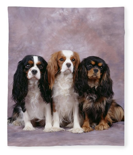 Cavalier King Charles Spaniels Fleece Blanket