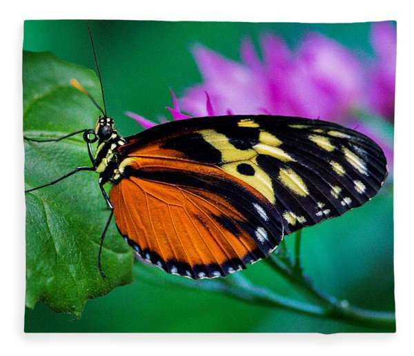 Fleece Blanket featuring the photograph A Splash Of Colour by Garvin Hunter