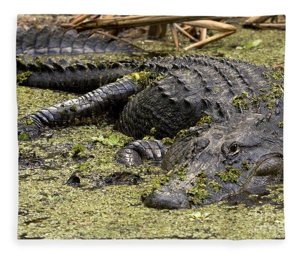 American Alligator Smile Fleece Blanket