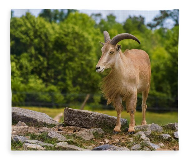 Fleece Blanket featuring the photograph Barbary Sheep by Garvin Hunter