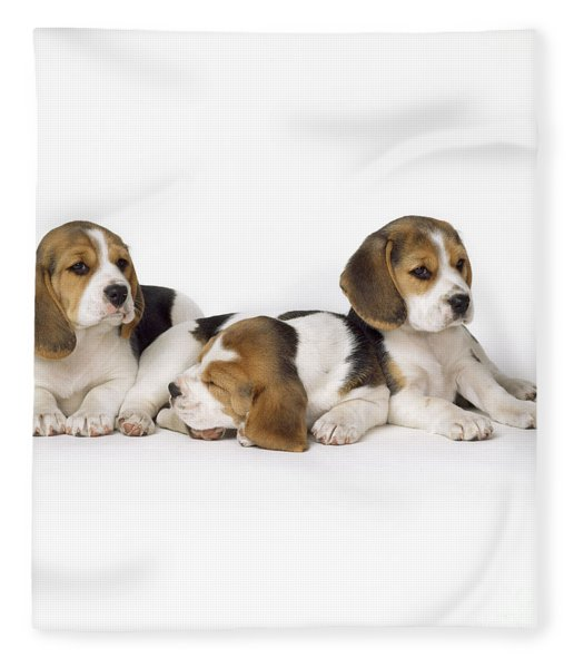 Beagle Puppies, Row Of Three, Second Fleece Blanket