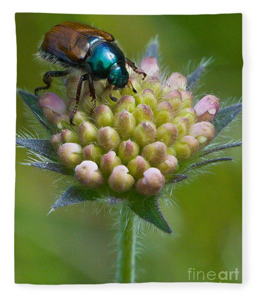 Beetle Sitting On Flower Fleece Blanket