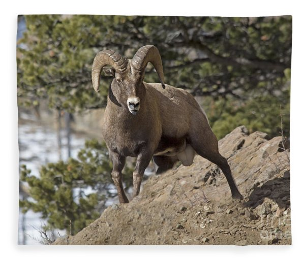 Big Horn Ram Fleece Blanket