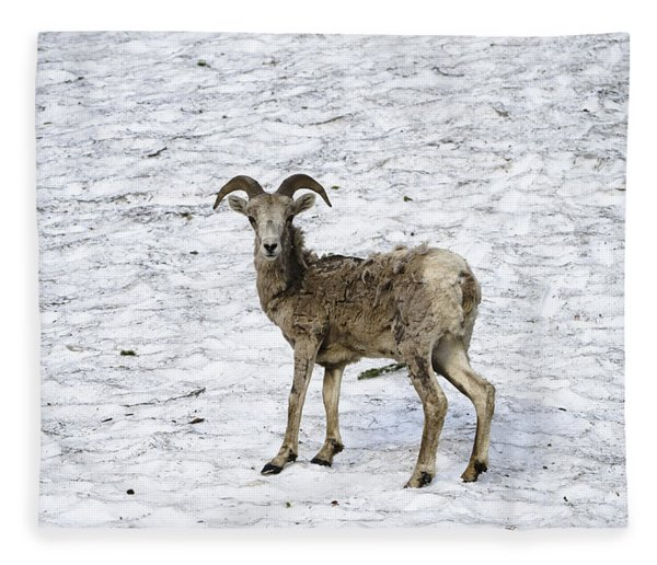Bighorn Sheep Fleece Blanket
