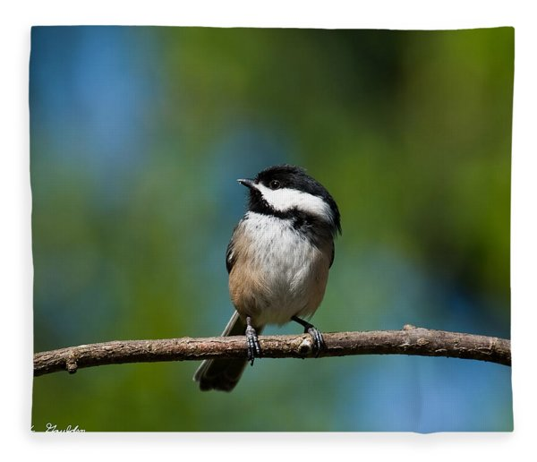 Black Capped Chickadee Perched On A Branch Fleece Blanket