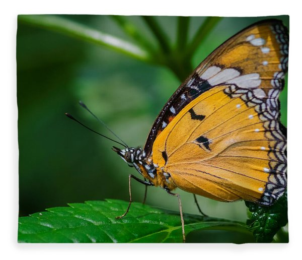 Fleece Blanket featuring the photograph Butterfly  by Garvin Hunter