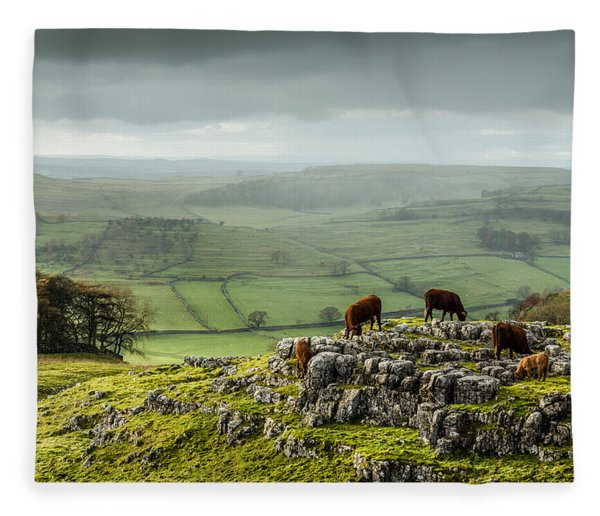 Cattle In The Yorkshire Dales Fleece Blanket