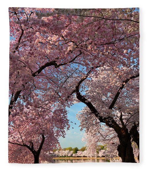 Cherry Blossoms 2013 - 024 Fleece Blanket