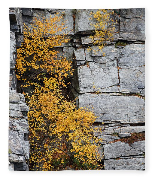 Fall Foliage Colors 01 Fleece Blanket