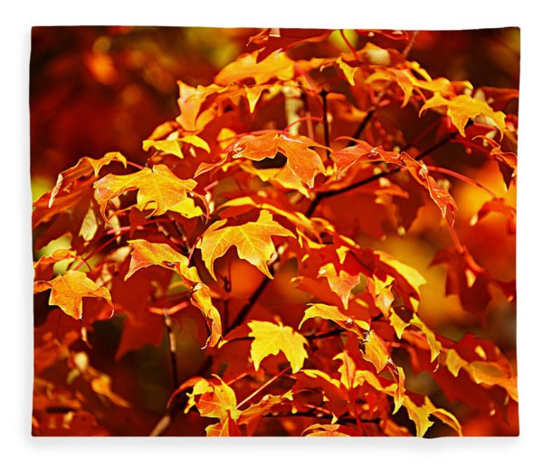 Fall Foliage Colors 14 Fleece Blanket