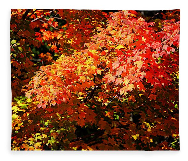 Fall Foliage Colors 21 Fleece Blanket