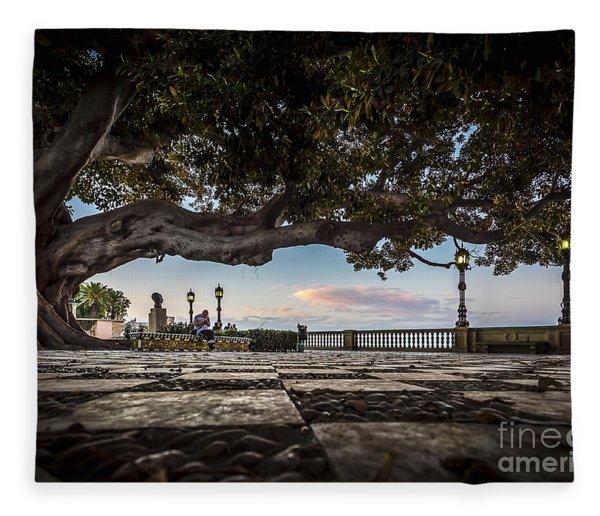 Ficus Magnonioide In The Alameda De Apodaca Cadiz Spain Fleece Blanket