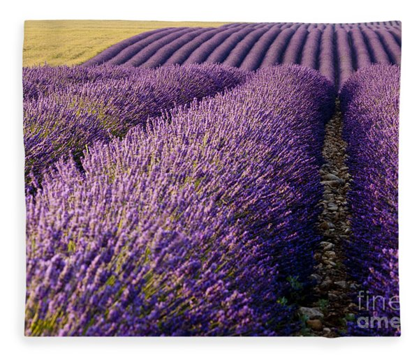 Fleece Blanket featuring the photograph Fields Of Lavender by Brian Jannsen