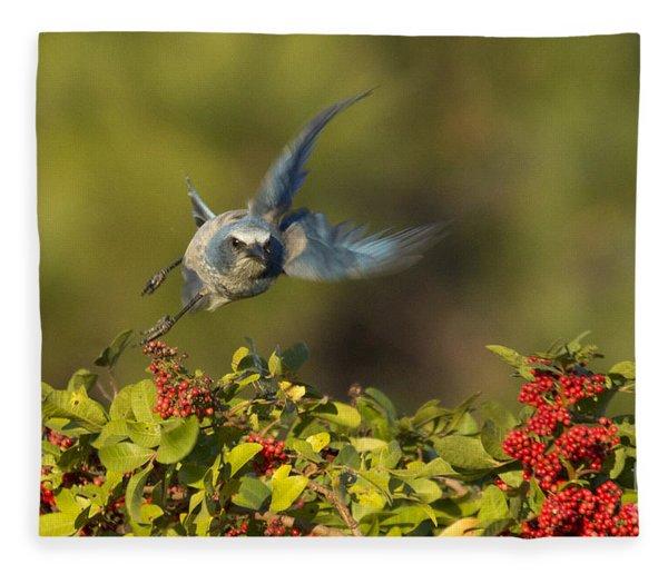 Flying Florida Scrub Jay Photo Fleece Blanket
