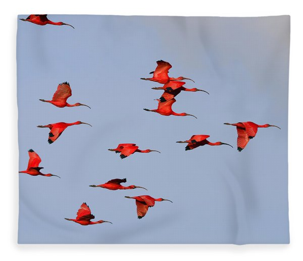 Frankly Scarlet Fleece Blanket