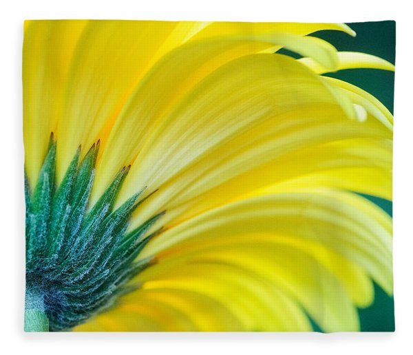 Fleece Blanket featuring the photograph Gerber Daisy by Garvin Hunter