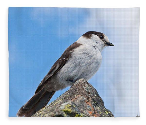 Gray Jay With Blue Sky Background Fleece Blanket