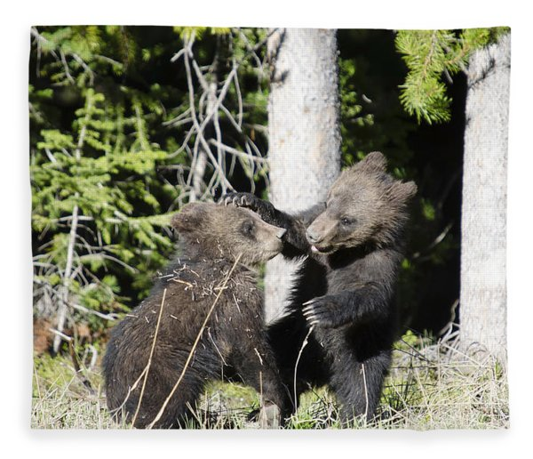 Grizzly Cubs Playing Fleece Blanket