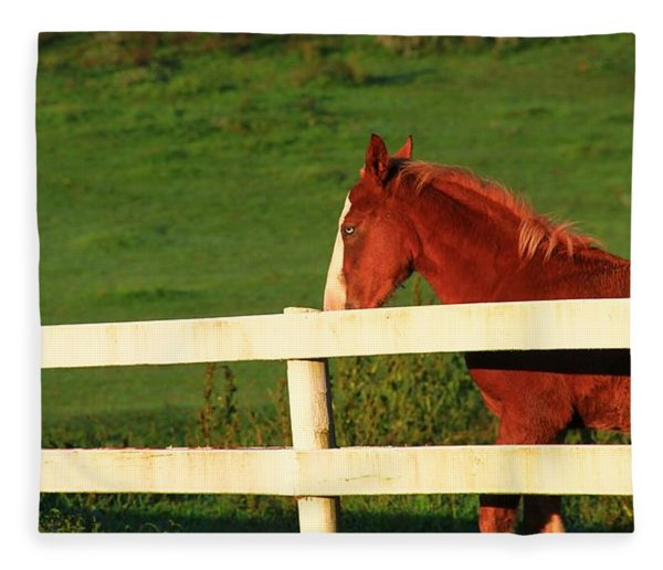 Horse And White Fence Fleece Blanket