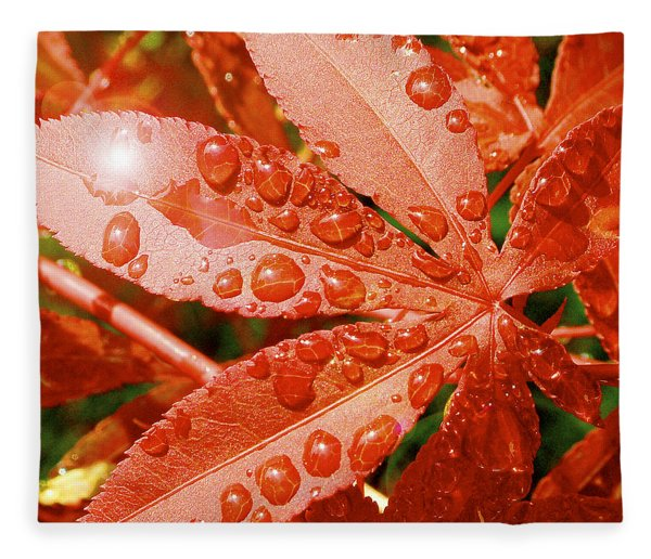 Japanese Maple Leaf With Rain Drops And Sunburst Fleece Blanket