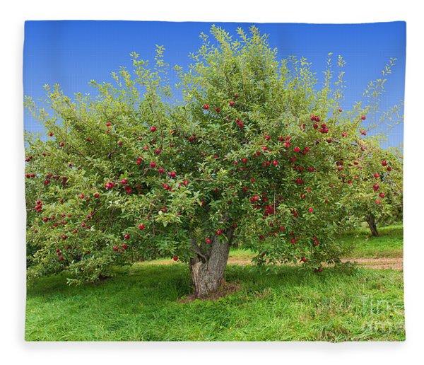 Large Apple Tree Fleece Blanket