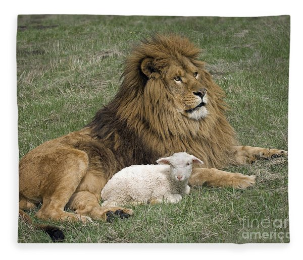 Lion And Lamb Fleece Blanket